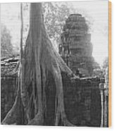 Ancient Temple With Strangler Fig Wood Print