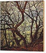 Ancient Winter Tree Wood Print