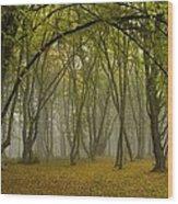 Ancient Wood Pasture Wood Print