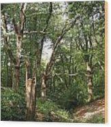 Ancient Woodland Wood Print