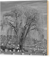 And The Willow Tree Weeps Wood Print