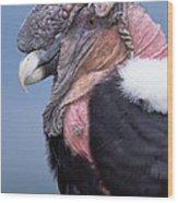 Andean Condor Vultur Gryphus Adult Male Wood Print