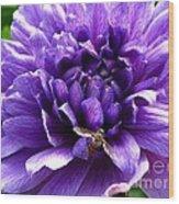Anemone Coronaria Named Lord Lieutenant Wood Print