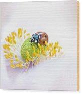 Anemone Lady Wood Print