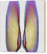 Angel Wing Shell, X-ray Wood Print