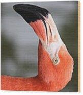 Angle Of A Flamingo Side B Wood Print