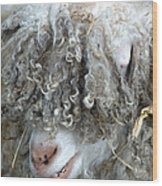 Angora Goat Wood Print