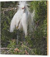 Angry Bird Snowy Egret In Breediing Plumage Wood Print