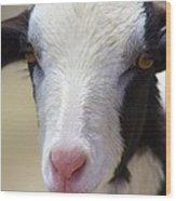 Anguilla Goat Wood Print