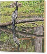 Anhinga And Reflection Wood Print