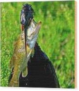 Anhinga And The Fish Wood Print