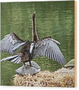 Anhinga On Turtle Wood Print