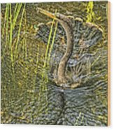 Anhinga's Catch Of The Day Wood Print