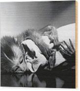 Animal Research Wood Print