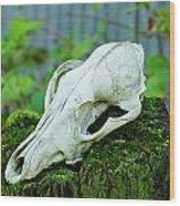 Animal Skull Wood Print