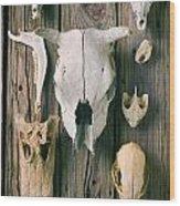 Animal Skulls Wood Print