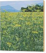 Anise To The Mountains Wood Print