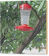 Another Hummingbird Wood Print