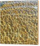 Anphibian Agua Wood Print