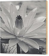 Ansel's Lily Wood Print