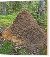 Ant Hill Wood Print by Bjorn Svensson