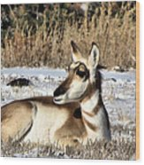 Antelope In Wintertime Wood Print
