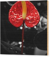 Anthurium Rising Wood Print by Jacqui Collett