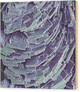 Antihistamine Drug Crystals, Sem Wood Print