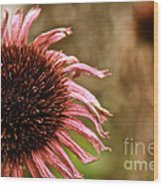 Antique Cone Flower Wood Print