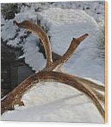 Antler 2 Wood Print by Heather L Wright