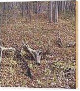 Antler Log Wood Print