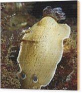 Aphelodoris Varia Sea Slug Nudibranch Wood Print