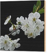 Apple Blossom 1015 Wood Print