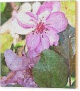 Apple Blossom II Ab2wc Wood Print