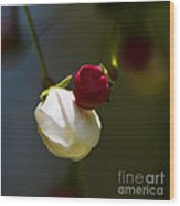 Apple Blossom Time Wood Print by Mitch Shindelbower