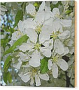 Apple Blossoms On The Trail Wood Print