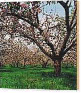 Apple Orchard, Co Armagh, Ireland Wood Print