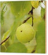 Apple Taste Of Summer Wood Print