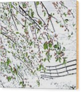 Apple Tree In Bloom With Spring Snow Wood Print