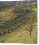 Apple Tree Orchard Like River In  Mountain Wood Print by Bernard Grua