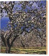 Apple Trees In An Orchard, County Wood Print