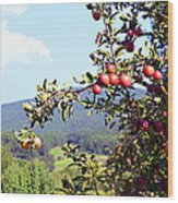 Apples On A Tree Wood Print