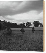 Approaching Storm Over Tree Farm Wood Print by Jan W Faul