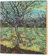 Apricot Trees In Blossom Wood Print by Pg Reproductions