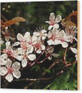 April Plum Blossom Wood Print