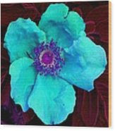 Aqua Rugosa Wood Print