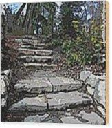 Arboretum Stairway Wood Print by Tim Allen