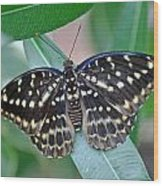 Archduke Butterfly Wood Print