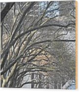 Arched Trees Wood Print