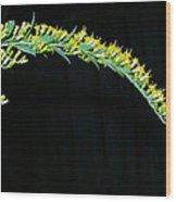 Arching Goldenrod Wood Print